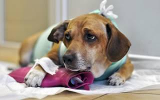 8 лучших обезболивающих для собак: после операции, при онкологии, инструкции по применению