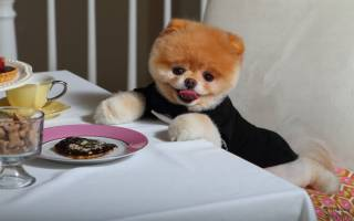 9 самых милых пород собак в мире: фото и описание