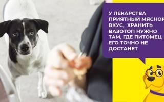 Вазотоп для собак: инструкция по применеию, цена и аналоги