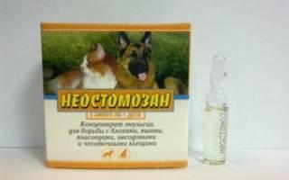 Неостомозан: инструкция по применению для собак и кошек
