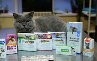 Цистит у кошек: симптомы и лечение в домашних условиях антибиотиками, таблетками и уколами