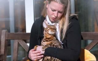 Как приручить кота, кошку или котенка с улицы: дикие коты, как приручить к рукам