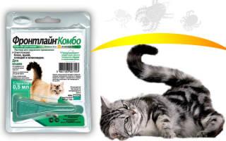 Фронтлайн для кошек: инструкция по применению