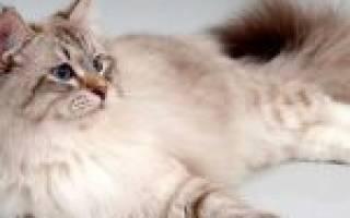 8 средств, чем обработать место, где гадит кошка, чтобы больше не гадила