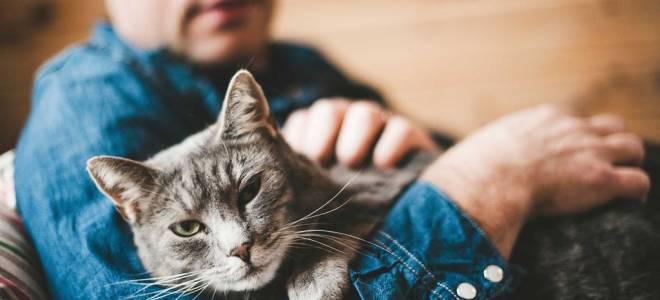 Любят ли кошки своих своих хозяев: как выражают свою любовь, скучают или нет