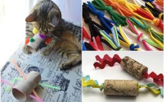 Игрушки для кошек и котят своими руками: как сделать в домашних условиях