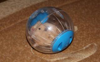 Прогулочный шар для хомяка: как сделать своими руками в домашних условиях