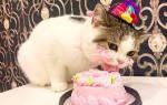 Кошки: можно ли давать собачий корм, еду для котят, рыбу, сладкие продукты и шоколад