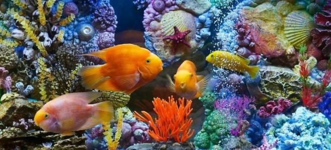 16 видов аквариумных рыбок: самые популярные породы для домашнего аквариума и их названия