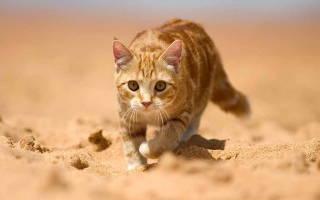 Темная моча у кота: причины коричневого цвета и лечение, нормальный цвет
