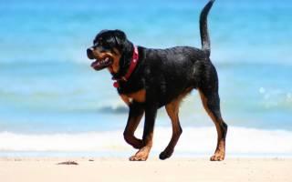 11 самых злых пород собак: описание и стоимость щенков