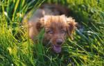 5 причин, почему собака ест траву: что это значит и когда необходимо показать врачу