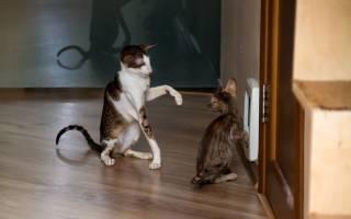 Кот метит в доме: как отучить народными средствами и что делать если ничего не помогает