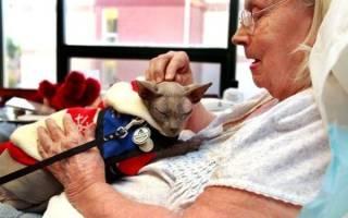 Кошки лечат людей: как кошки лечат своих хозяев, правда это или вымысел