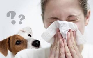 Аллергия на собак: причины, симптомы, как проявляется, медикаментозное лечение
