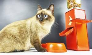 Автокормушка для кошек своими руками: из бутылки, из картона, из ДСП