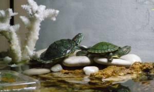 Островок для красноухой черепахи: как сделать своими руками, из чего