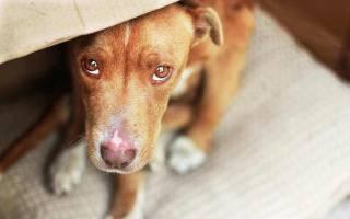 Как правильно наказывать собаку: воспитание щенка и взрослого пса, разрешенные и запрещенные методы