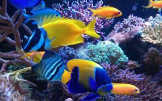 15 красивых и экзотических аквариумных рыбок: пресноводные и самые яркие