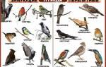 21 вид птиц: описание, разновидности и как называются
