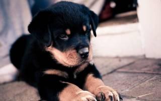 Алиментный щенок: что это такое, что это значит и как правильно выбрать