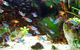 10 лучших рыбок для начинающих: каких завести начинающему аквариумисту, описание и разведение
