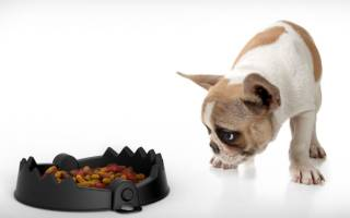 Состав корма для собак: обзорная таблица и сравнение производителей