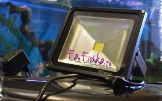 Подсветка для аквариума: как выбрать лампы, изготовление светодиодного освещения своими руками