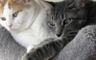 Капли гестренол для кошек: инструкция по применению