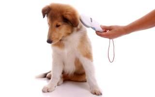 Чипирование животных: для чего нужно, что даёт, как его делают, что это значит