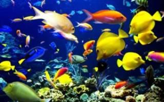 8 популярных хищных аквариумных рыбок: описание и содержание