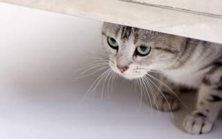 Как развеселить кота: во что с ним поиграть, на что обижаются кошки