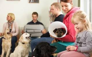 Панкреатит у собак: симптомы и лечение, возможные осложнения, уход за больным животным и диета