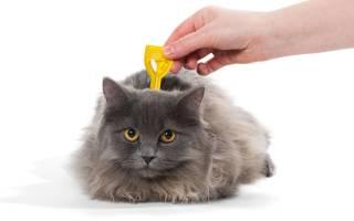 Гельминтал капли на холку для кошек: инструкция по применению, противопоказания