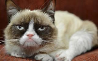 5 самых известных и знаменитых котов в мире: самый быстрый кот, самая старая кошка, самый пушистый кот