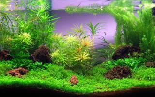 Удобрения для аквариумных растений: 5 лучших рецептов для изготовления своими руками