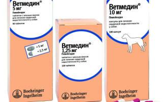 Ветмедин для собак: инструкция по применению, цена и аналоги