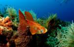 Какая должна быть температура воды для гуппи в аквариуме и правила кормления