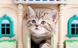 Котенок в доме: что нужно для появления в первые дни, с чего начать
