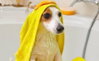 Как часто можно мыть собаку: как правильно мыть собаку в домашних условиях