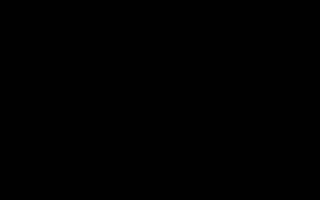 ОКД для собак: что такое общий курс дрессировки, что входит