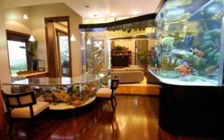 Аквариум и рыбки для начинающих: как выбрать емкость и рыбок, правила ухода и содержания