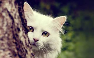 Анандин для кошек и собак: инструкция по применению капель