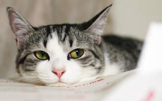 6 видов корма для стерилизованной кошки: чем кормить, как правильно кормить