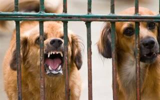 Что делать, если укусила собака: симптомы бешенства после укуса, признаки, уколы и последствия