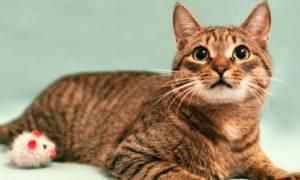 6 вариантов, куда деть кота или кошку, если они не нужны