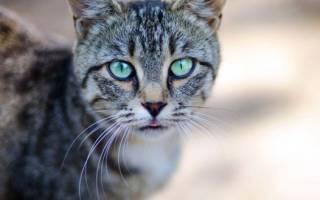 У кошки опухла нижняя губа: причины и лечение, что делать и как лечить
