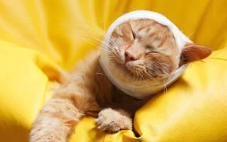Инсульт у кошек: симптомы, признаки и методы лечения