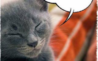 8 основных причин почему мяукает кот, кошка или котенок: что делать и когда необходимо обратиться к ветеринару