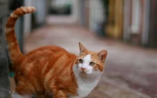 Пропала кошка и ушел кот: что делать и как искать, почему коты уходят и не возвращаются